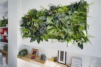 mur végétal - bureau de direction